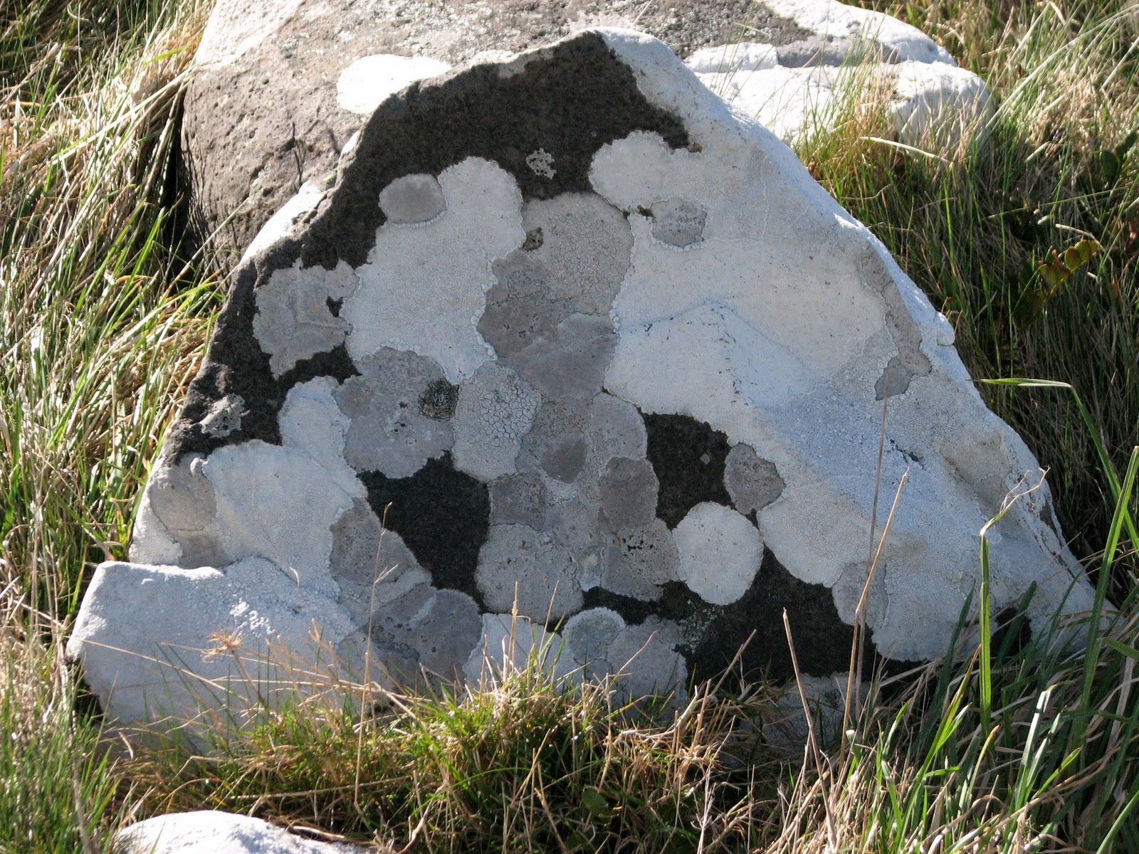 black & white spotted rock