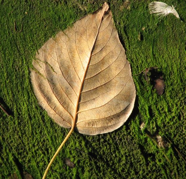 Inlet - leaf