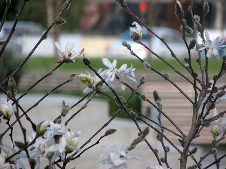 spring sprigs Palmerston North.JPG