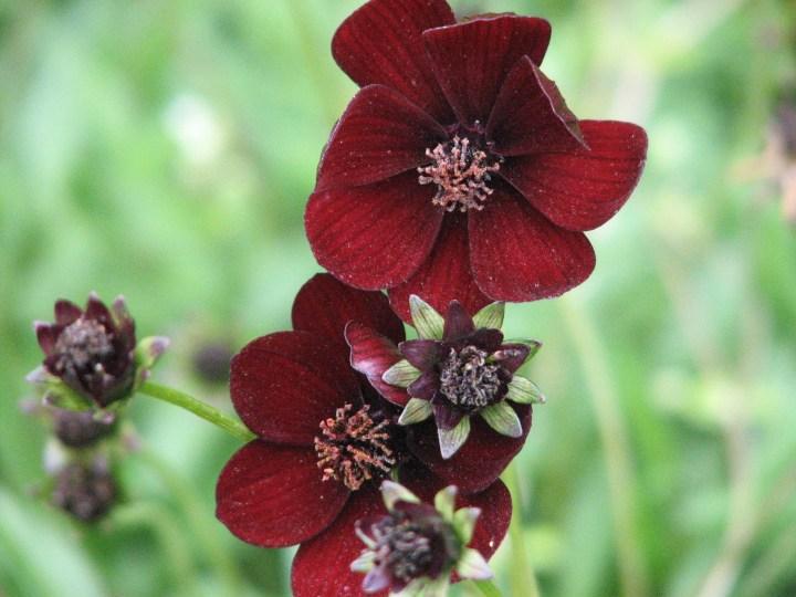 black-flower