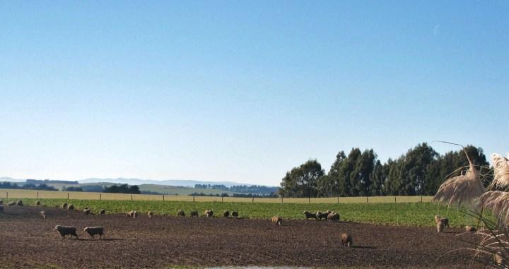 pastoral near Clinton.JPG