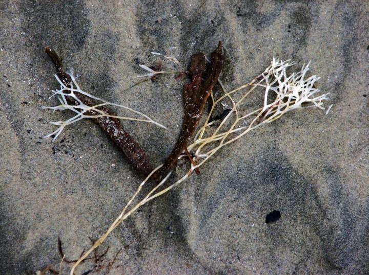 beach detritus.JPG