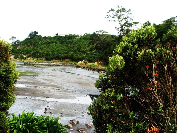 Inlet low tide mud.JPG
