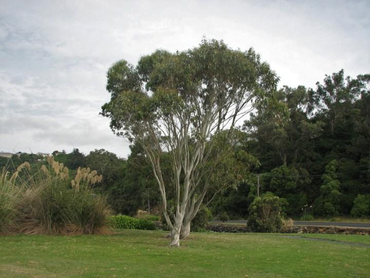 trees by inlet.JPG