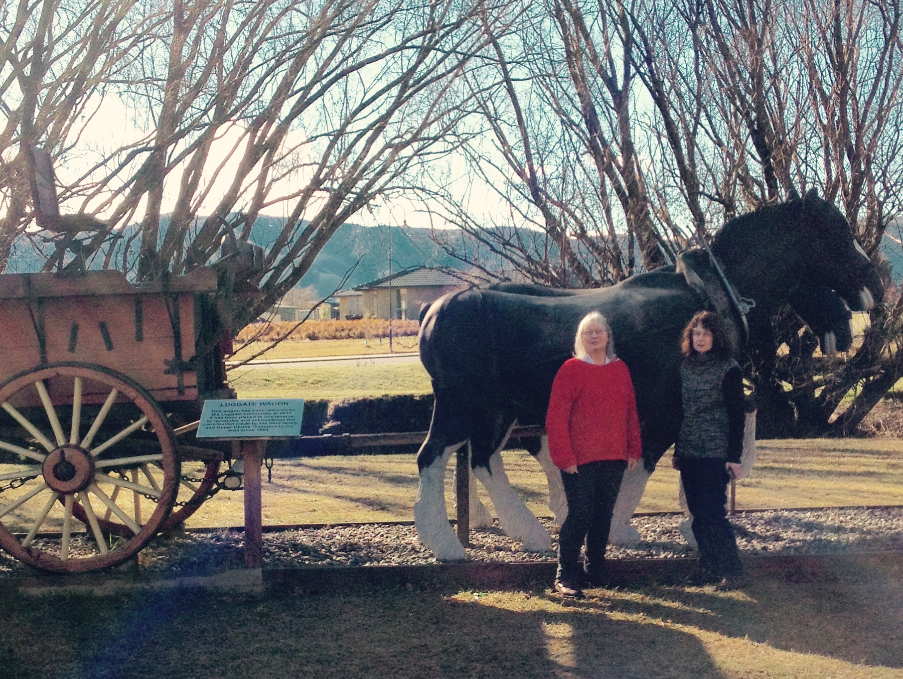 J&K Luggate horses.jpg