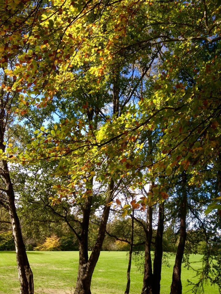 autumn group RH park