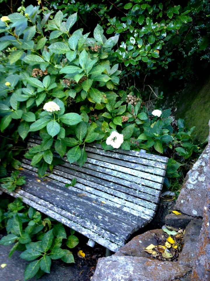 bench in dell.JPG
