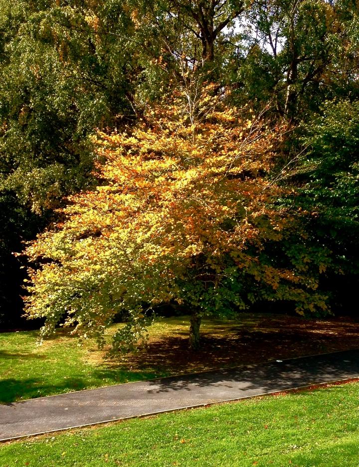 tree alone.jpg