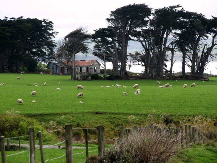 York house and sheep x2.JPG