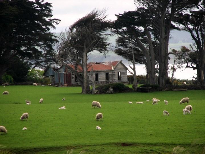 York House and sheep