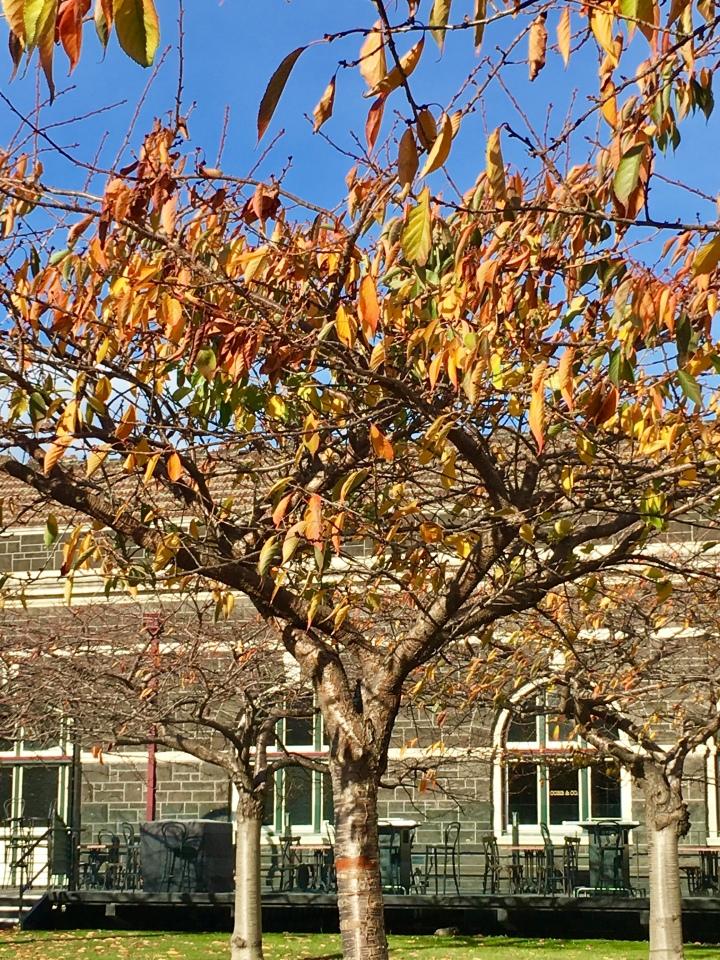 railway station tree.jpg
