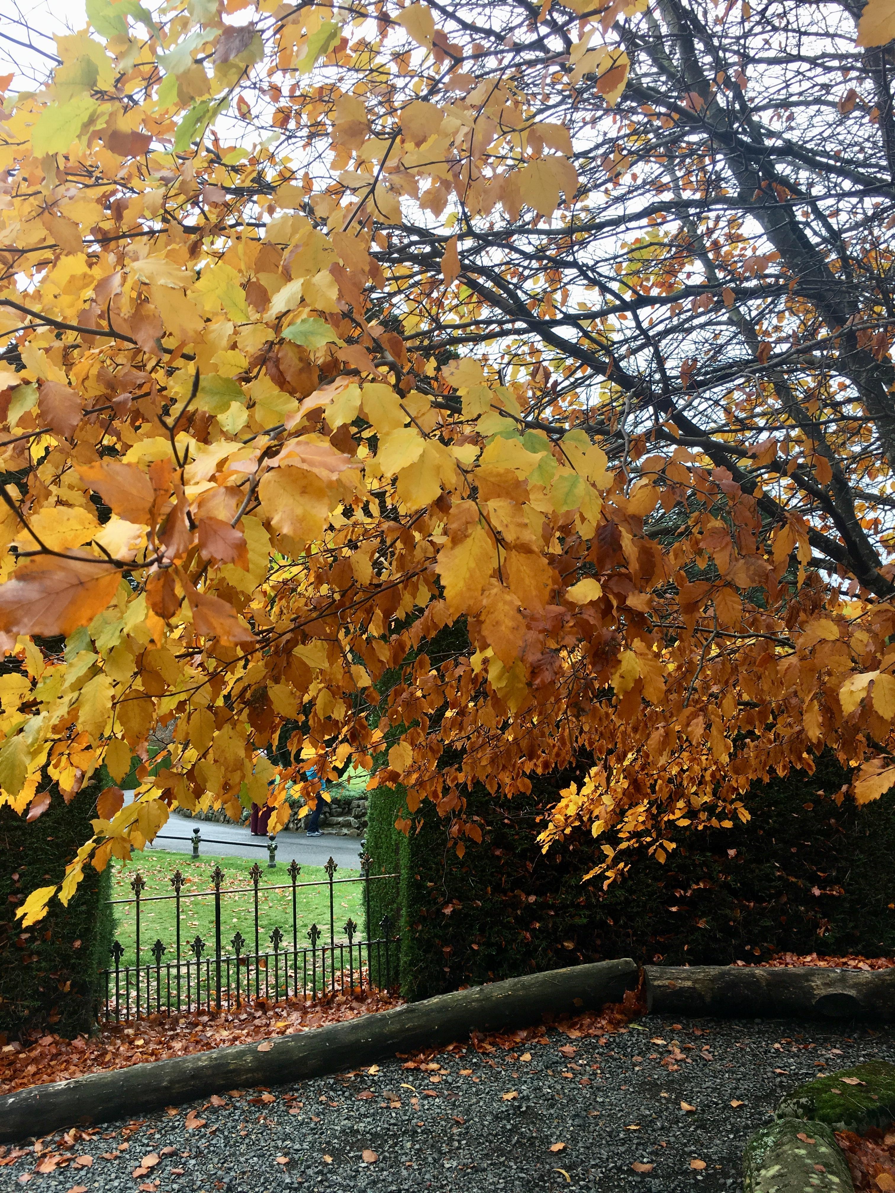 tree by gate.jpg
