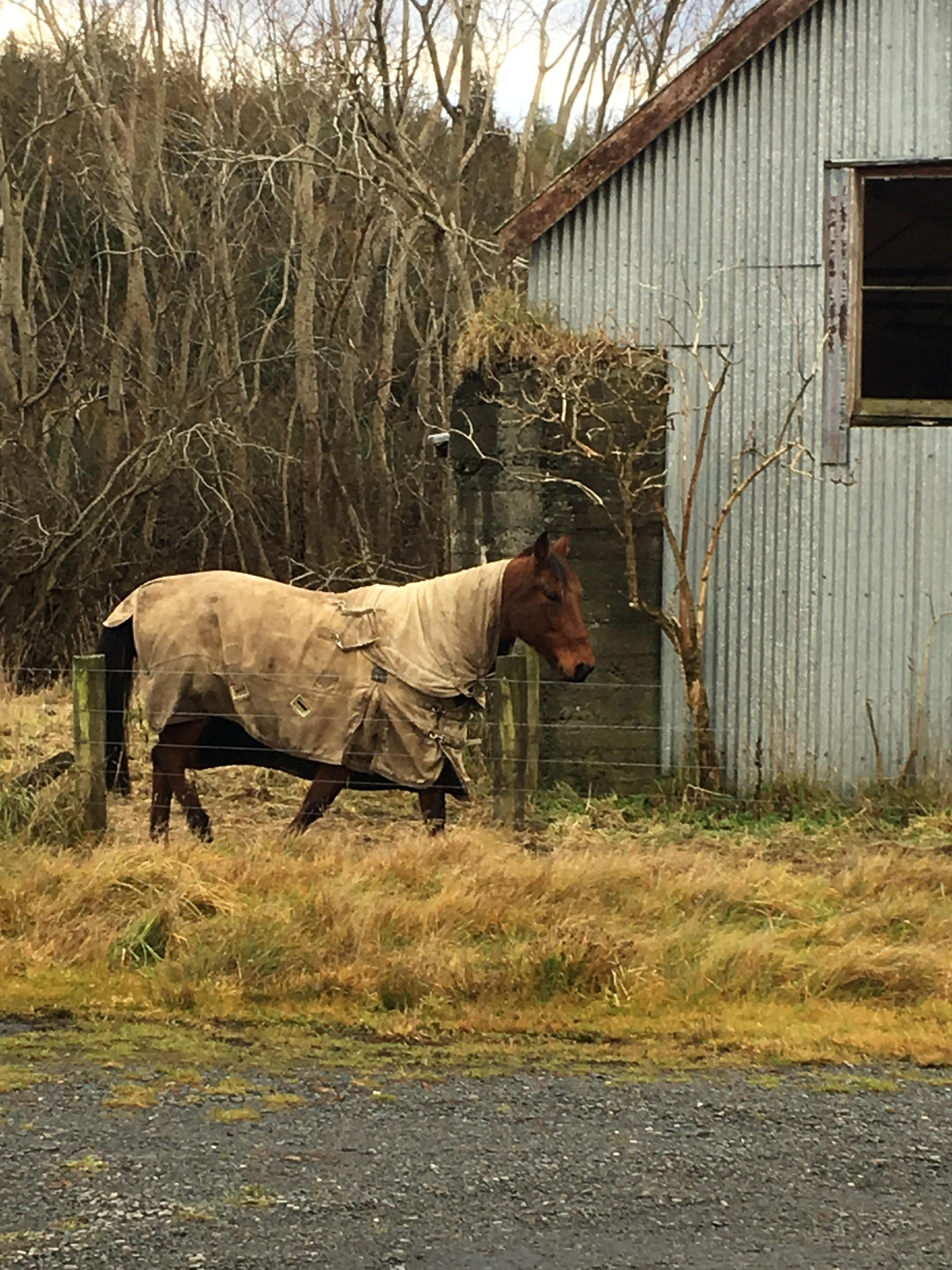 horse walking Tinkertown