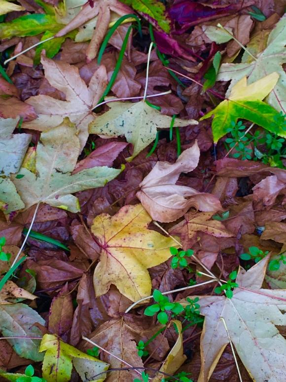 leaf heap