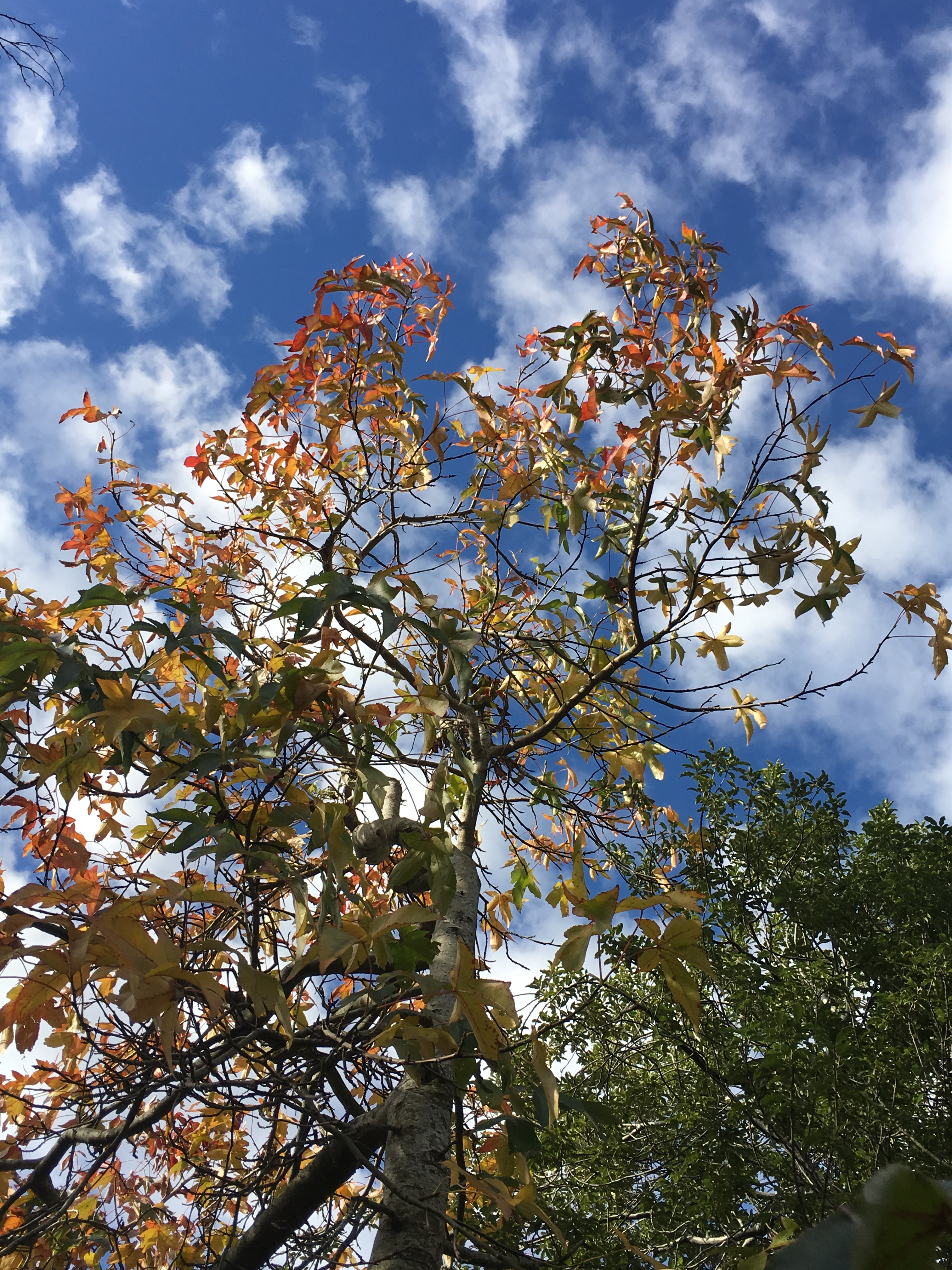 leaves against the sky.JPG