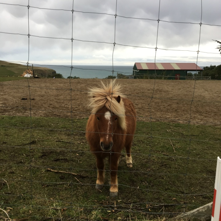 one pony 2