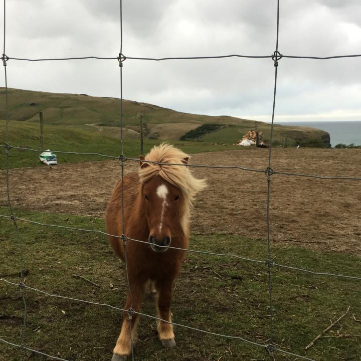 one pony