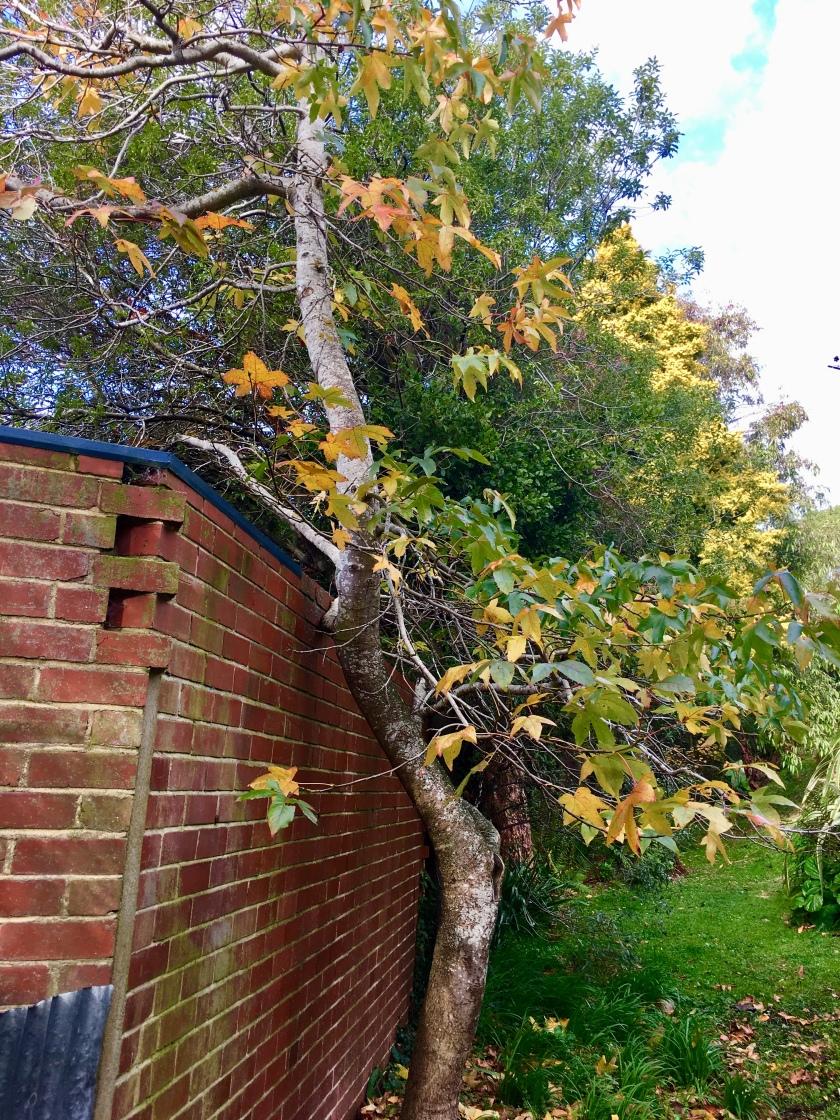 tree and wall.jpg