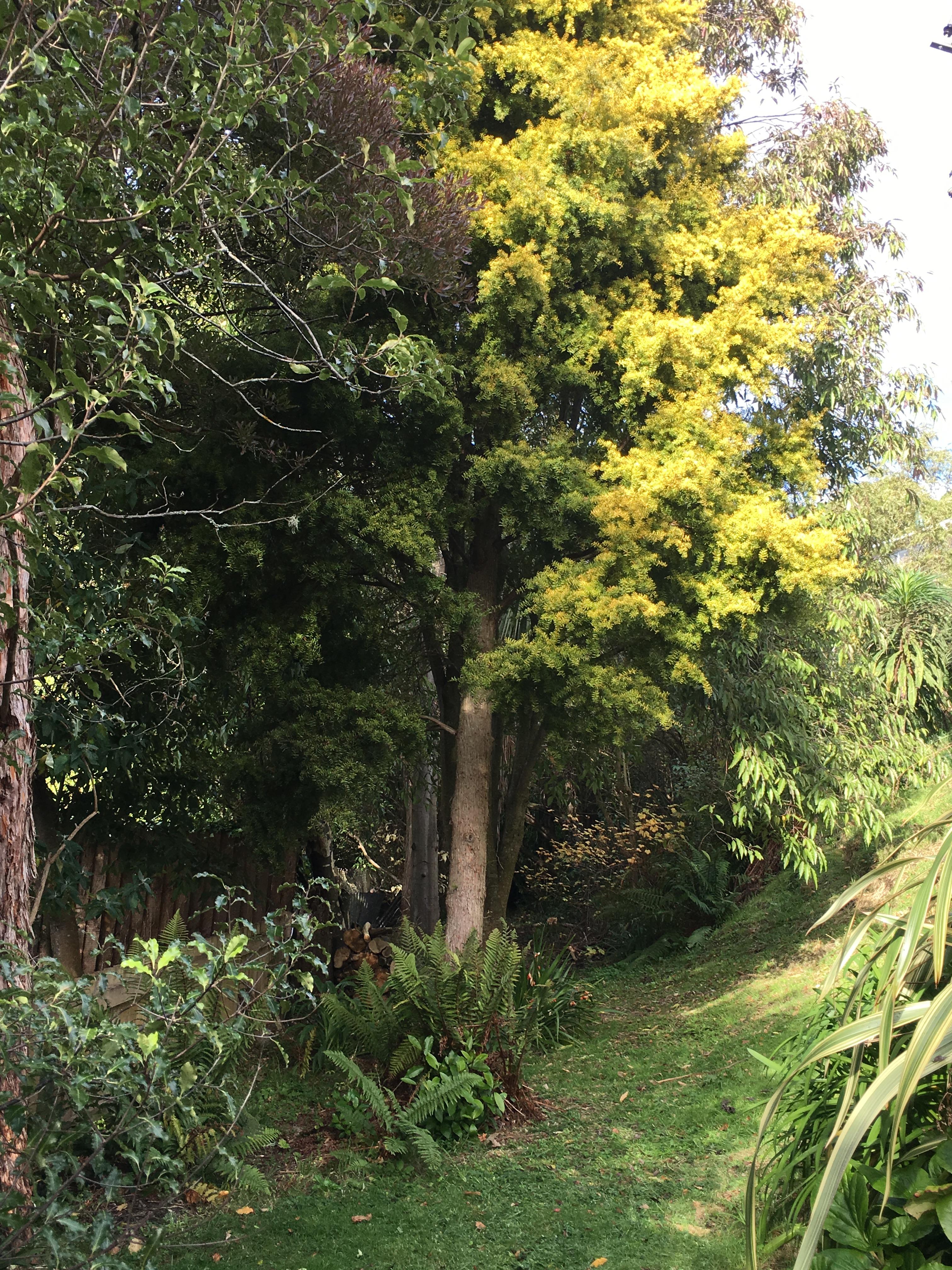 tree & grass.JPG