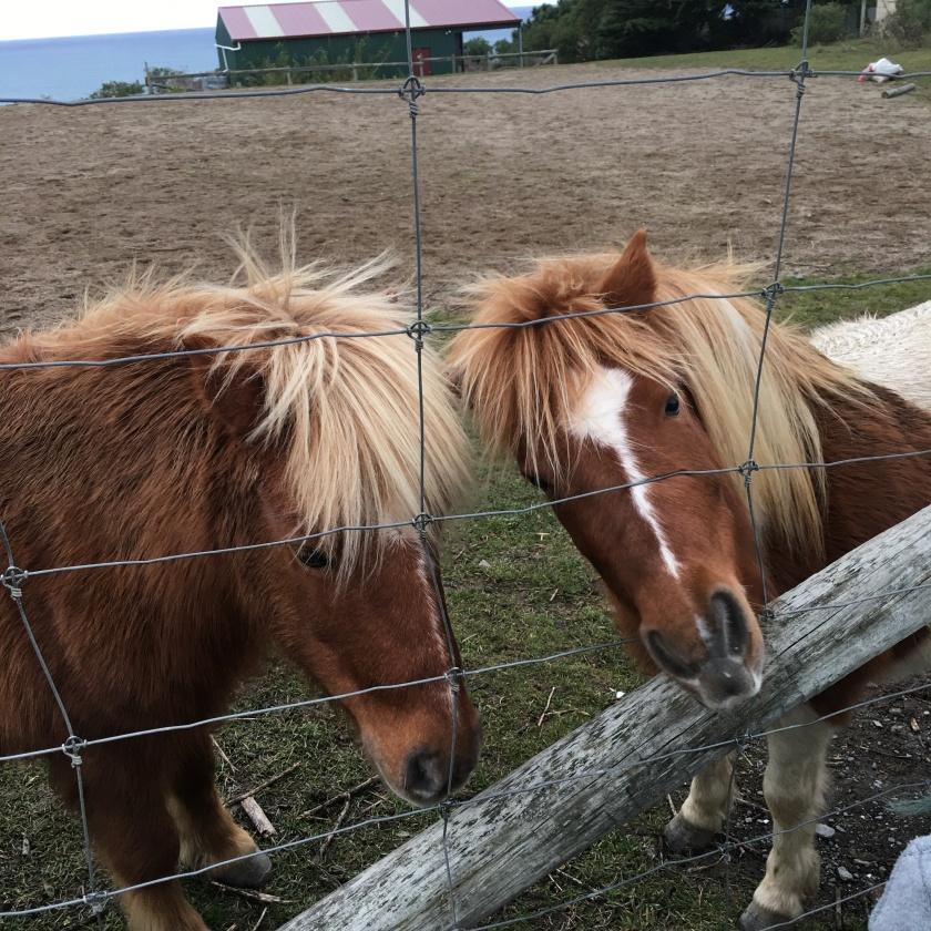 two ponies.JPG