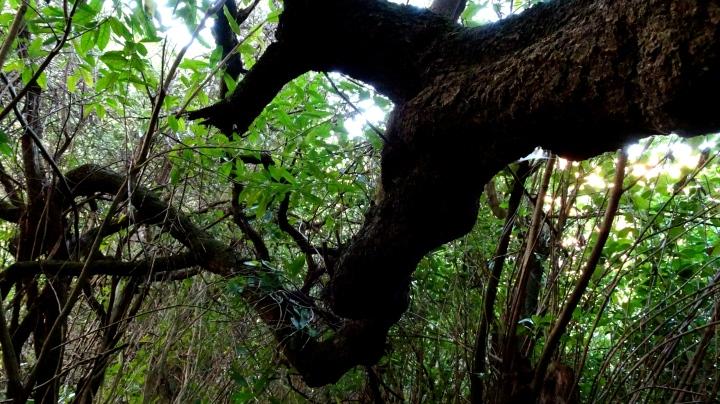 Large Branch.JPG