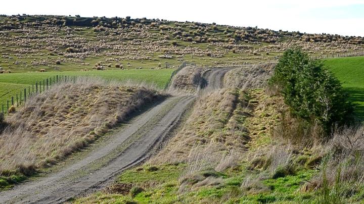 hillocky road.JPG
