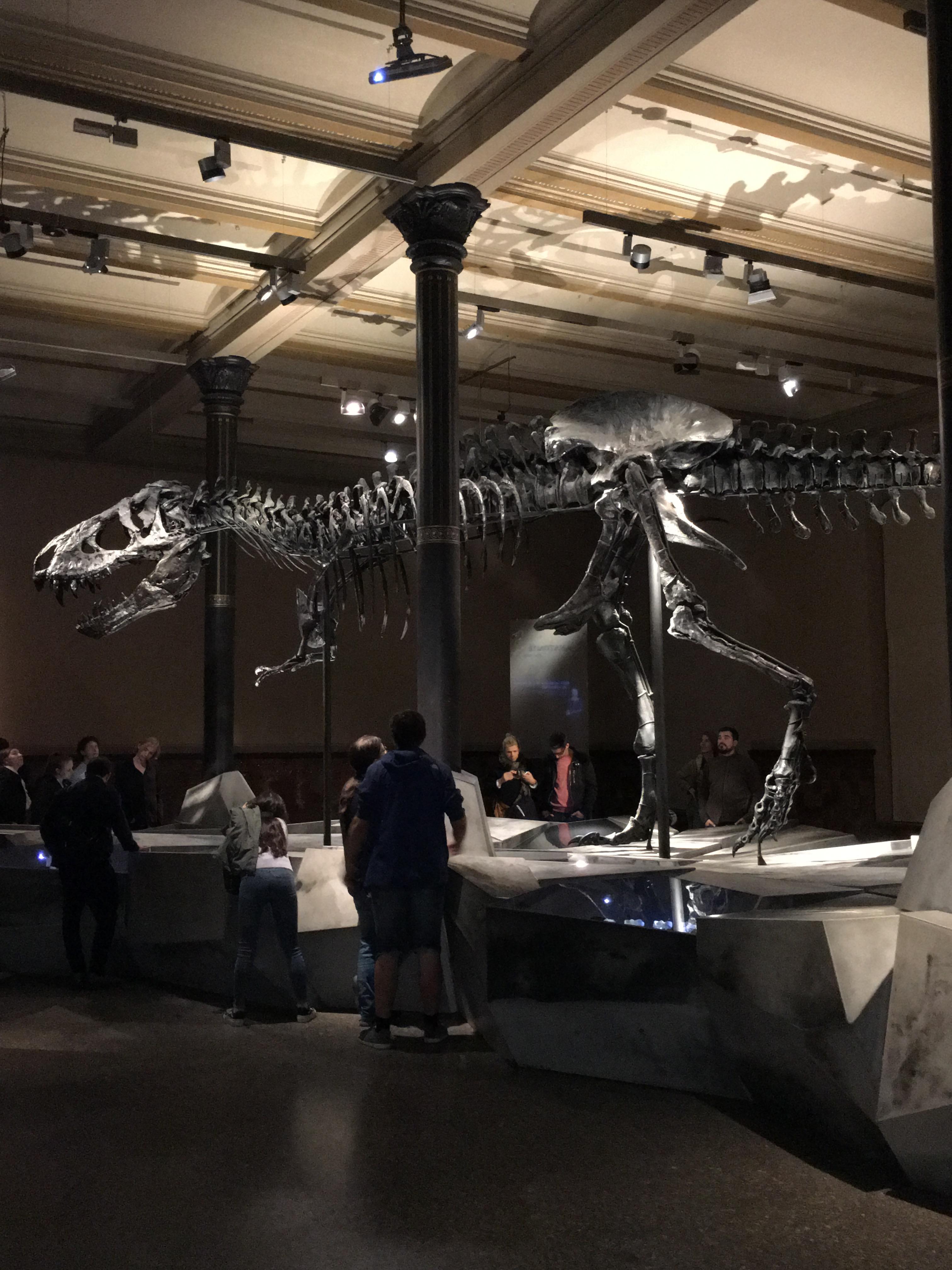 tyrannosaurus rex 2.JPG