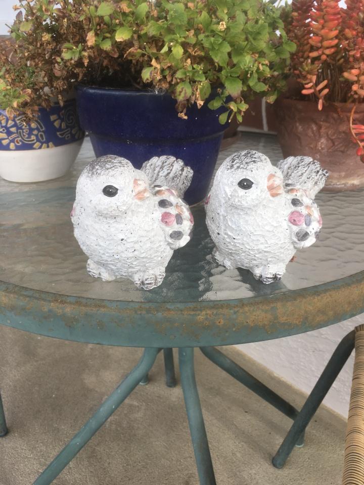dorothy's birds
