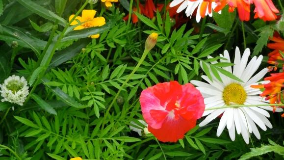 Kate's garden 2.JPG