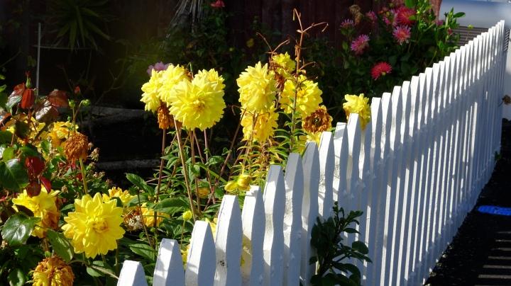 Liz's garden.JPG