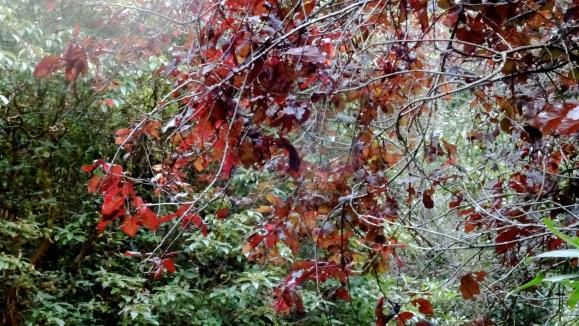 red autumn leaves.JPG