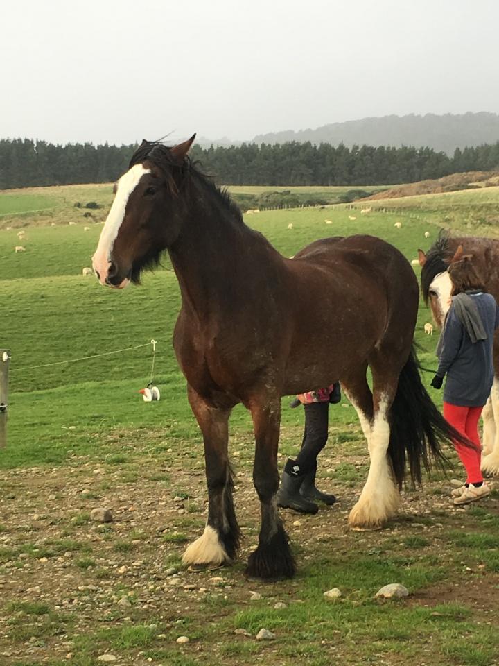 Jenny & horses