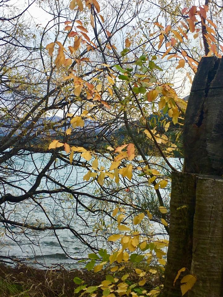 autmn stump & water.jpg