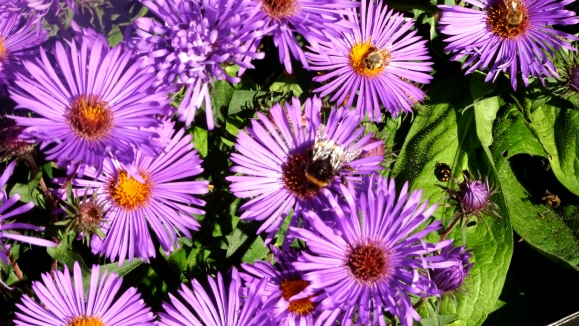 purple flowers, bee and ladybird.JPG