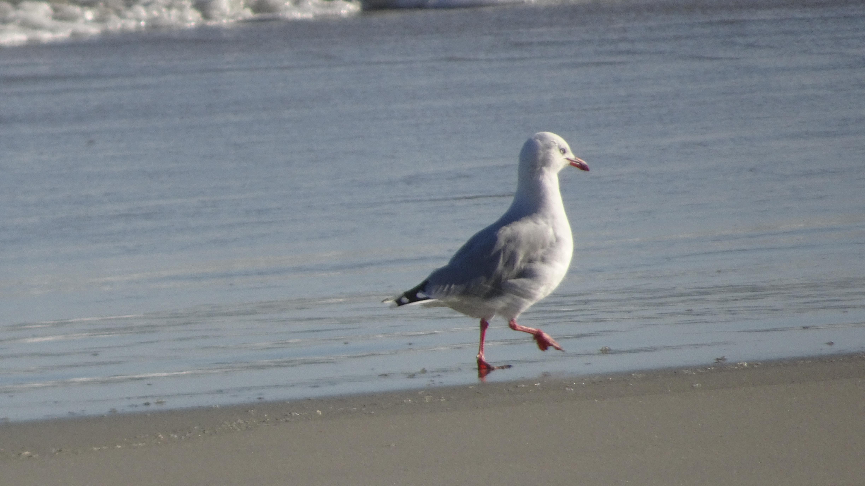 seagull alone.JPG