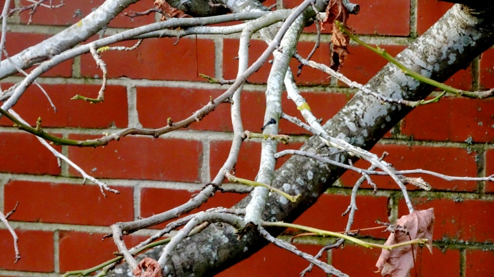 close up of tree against brick