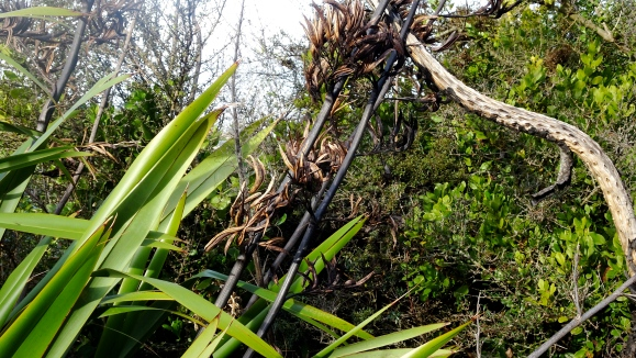 flax pods & leaves.JPG