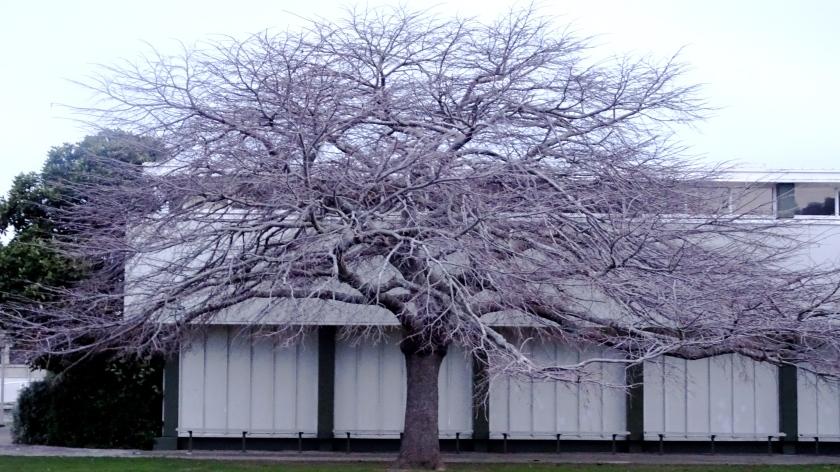 full skeleton tree.JPG