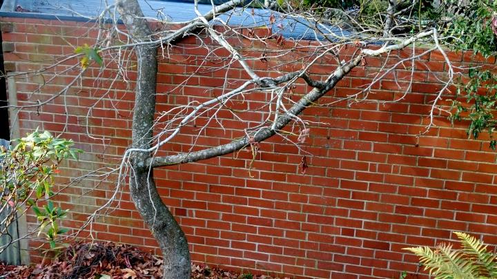 tree against brick wall
