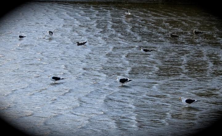blackbill row.JPG