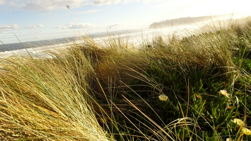 mirram grass.JPG